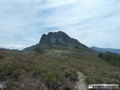 La Tornera ; Pico Porrejón – Sierra de la Puebla;asociaciones de senderismo en madrid tejo árbol